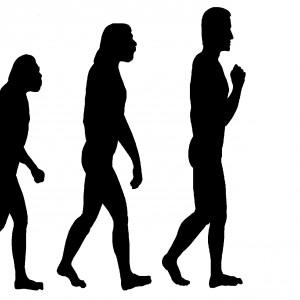 Evolution Quest