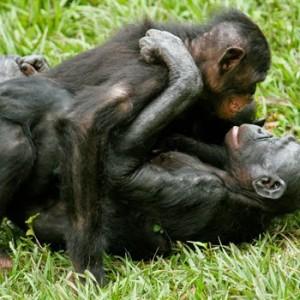 Living Like Bonobos