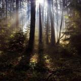 Un écho dans les bois